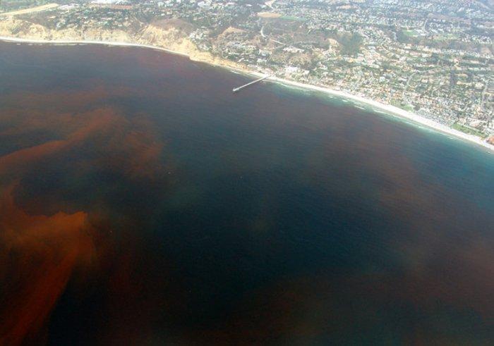 red tide in la jolla